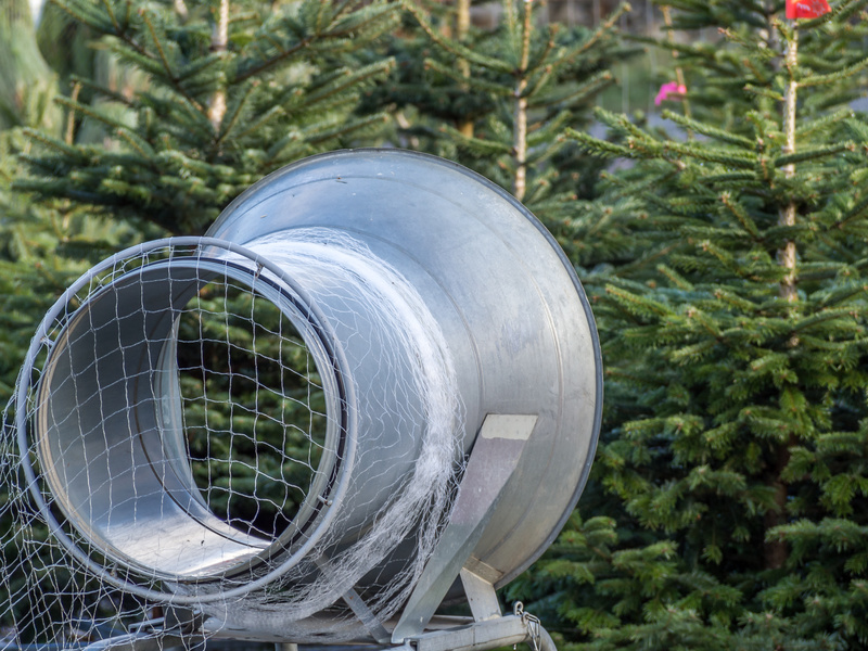 welcher weihnachtsbaum ist der richtige f r mich. Black Bedroom Furniture Sets. Home Design Ideas